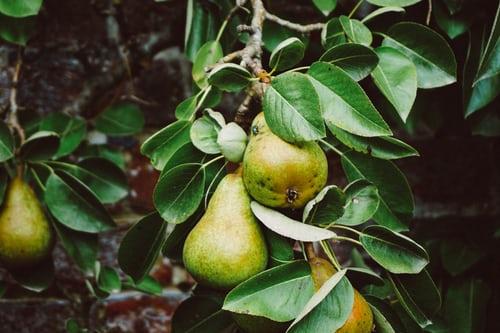 food forest come trasformare proprio orto giardino oasi bellezza cibo 1562585223
