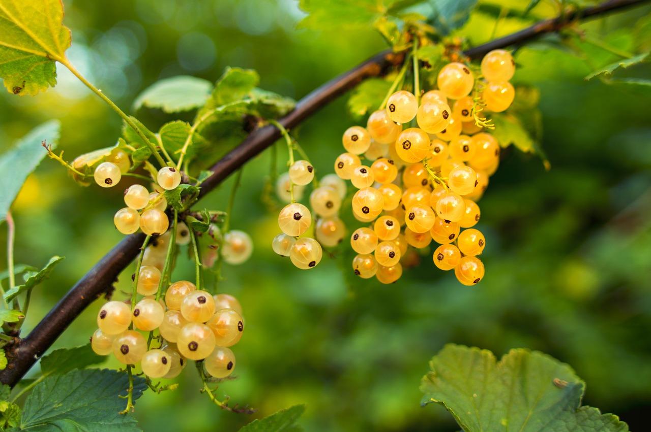 food forest come trasformare proprio orto giardino oasi bellezza cibo 1562585439