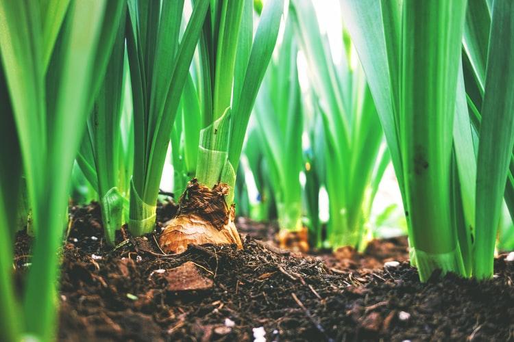 food forest come trasformare proprio orto giardino oasi bellezza cibo 1562585760