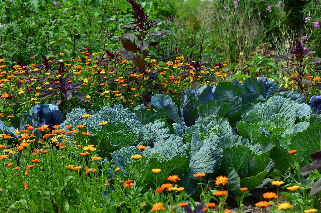 Progettare Un Giardino In Campagna food forest: trasformare il proprio orto o giardino in un
