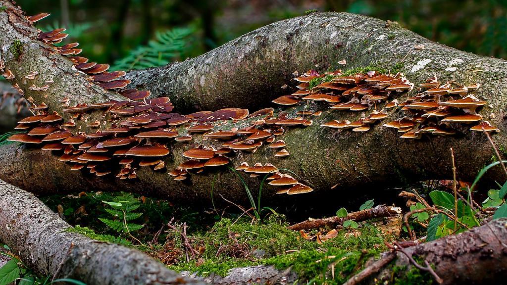i funghi possibili protagonisti delle bonifiche ambientali 1550217813
