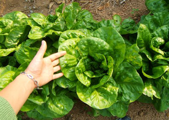 le buone erbacce scoperta vero cibo naturale gigi manenti 1557394204