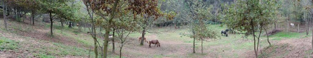 oasi di scacco e hope nuova vita cavalli 1538643080