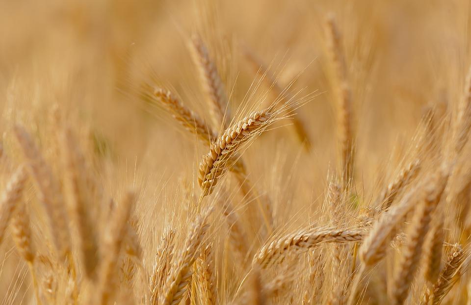 ora in piemonte nuova legge agricoltura 1547033698