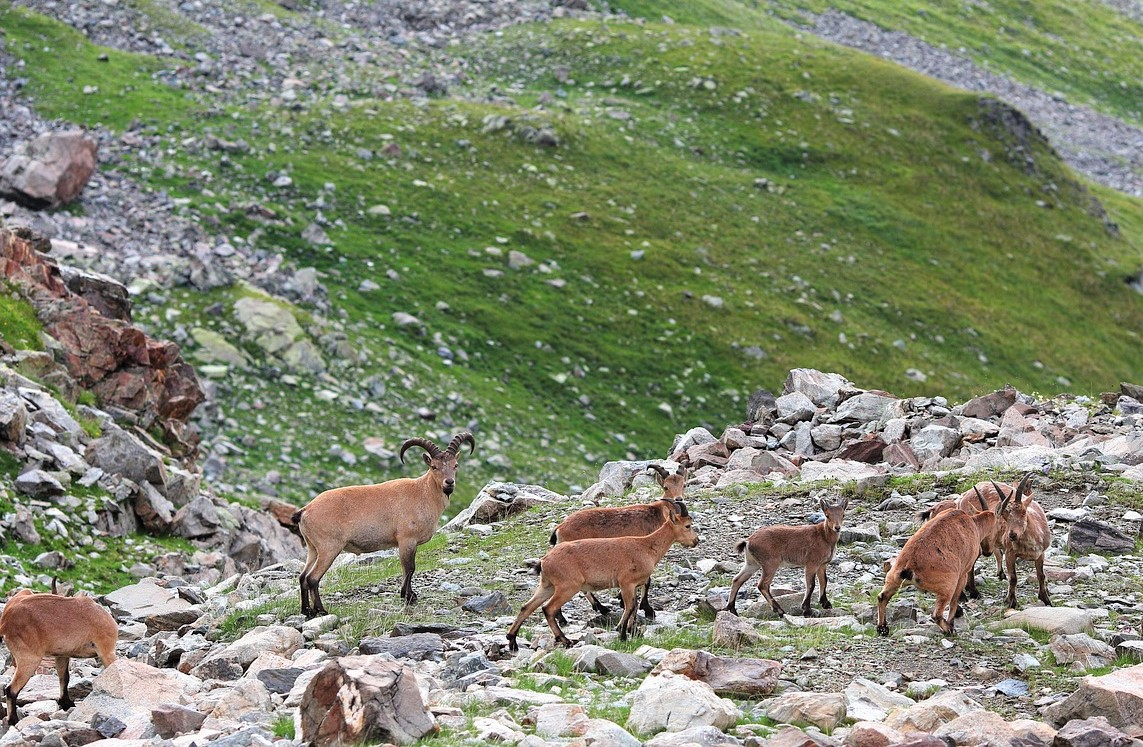 piemonte nuova legge montagna recupero borghi green communities 1554377781