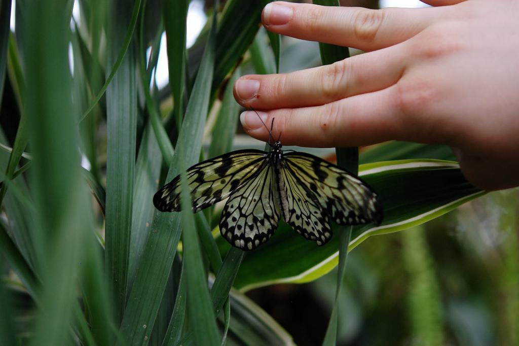 progetto cambiamenti attivita ludicodidattica sviluppo coscienza ambientale 1490348733