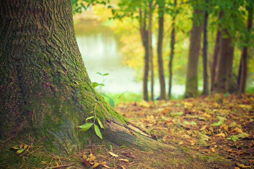 silvoterapia quanto conta abbracciare un albero 1552039517