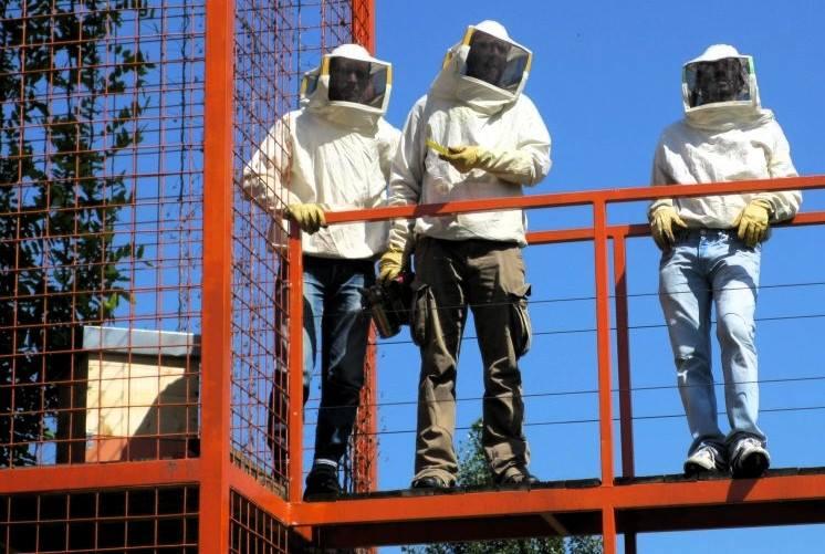 urbees viaggio api dalla campagna alla citta 1519292009